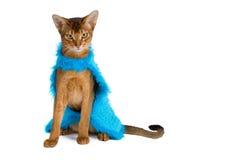 De kat van Abyssinian Stock Afbeelding