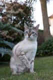 De kat van Bengalen Royalty-vrije Stock Fotografie