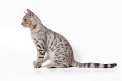 De kat van Bengalen Royalty-vrije Stock Afbeeldingen