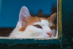 De kat van Courious Stock Afbeelding