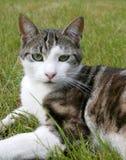 De kat van Courious stock foto