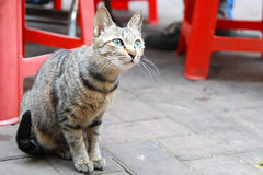 De kat van Curioity Royalty-vrije Stock Foto