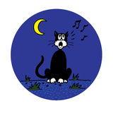 De Kat van de binnenplaats Stock Foto's