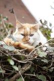 De kat van de boom Royalty-vrije Stock Afbeeldingen
