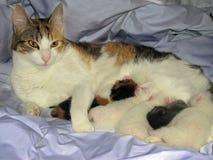 De kat van de familie Royalty-vrije Stock Fotografie