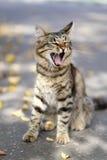 De kat van de geeuw Stock Foto