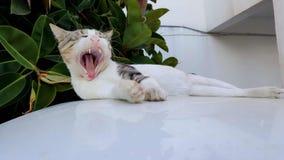 De kat van de geeuw Stock Fotografie