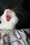 De kat van de geeuw Stock Foto's