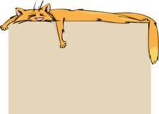 De kat van de gember Stock Foto