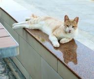 De kat van de gemberstraat stock foto's