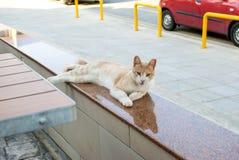 De kat van de gemberstraat royalty-vrije stock afbeelding