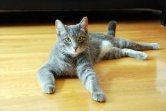 De Kat van de gestreepte kat stock foto's
