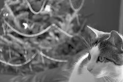 De Kat van de gestreepte kat bij Kerstmis Royalty-vrije Stock Foto's