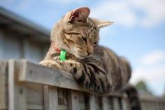 De kat van de gestreepte kat die op omheining wordt neergestreken Stock Afbeelding