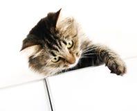 De kat van de gestreepte kat op de kast Stock Foto's