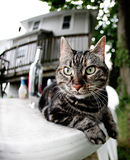 De kat van de gestreepte kat op een lijst Stock Afbeeldingen