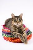 De kat van de gestreepte kat op stuk speelgoed royalty-vrije stock afbeelding