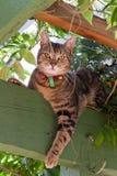 De kat van de gestreepte kat in tuin Royalty-vrije Stock Afbeelding