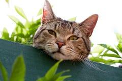 De kat van de gestreepte kat in tuin Stock Afbeeldingen