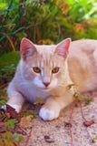 De kat van de herfst Stock Foto's