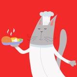 De kat van de kok Stock Foto