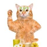 De kat van de kuuroordwas Stock Foto