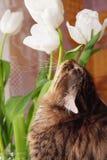 De kat van de lente Stock Foto