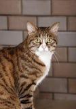 De kat van de luipaard Royalty-vrije Stock Afbeeldingen