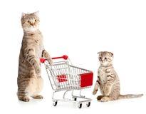 De kat van de moeder met boodschappenwagentje en katje stock afbeelding