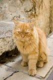 De kat van de roodharige Royalty-vrije Stock Afbeeldingen