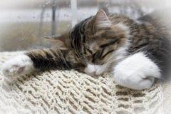 De kat van de slaap Stock Foto's
