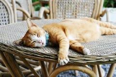 De kat van de slaap Royalty-vrije Stock Afbeeldingen
