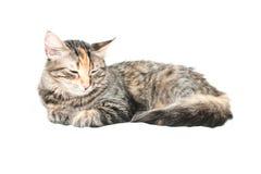 De Kat van de slaap stock afbeeldingen