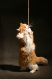 De kat van de sportman Royalty-vrije Stock Foto's