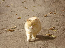 De kat van de stad Stock Fotografie