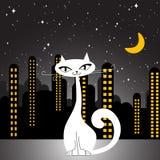De kat van de stad Stock Foto