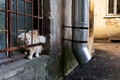 De Kat van de steeg Royalty-vrije Stock Fotografie