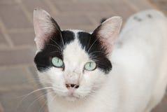 De kat van de straat Stock Fotografie