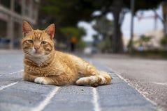 De kat van de straat Royalty-vrije Stock Afbeeldingen
