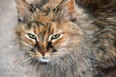 De kat van de straat Royalty-vrije Stock Afbeelding