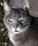 De Kat van de straat Stock Foto's