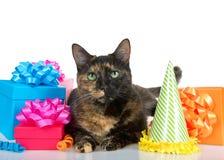 De kat van de Tortiegestreepte kat met verjaardagsgeschenk op witte achtergrond Stock Foto