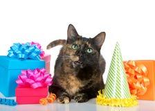 De kat van de Tortiegestreepte kat met verjaardagsgeschenk op witte achtergrond Royalty-vrije Stock Fotografie