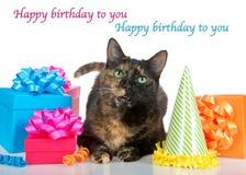 De kat van de Tortiegestreepte kat met verjaardagsgeschenk op witte achtergrond Stock Afbeeldingen