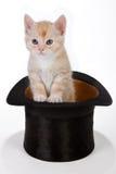 De kat van de tovenaar Royalty-vrije Stock Foto's
