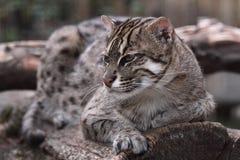 De kat van de visserij Stock Foto