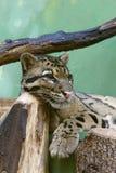 De kat van de visserij Royalty-vrije Stock Fotografie