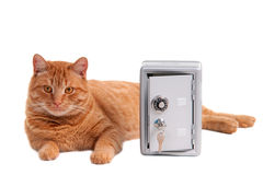De kat van de wacht Stock Foto