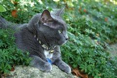 De kat van de wacht Royalty-vrije Stock Foto's