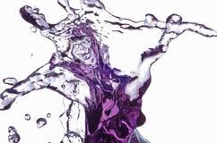 De Kat van de waterplons Royalty-vrije Stock Afbeeldingen